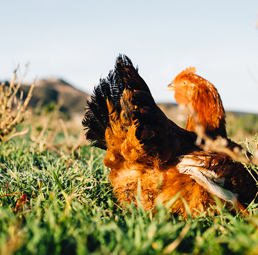 Loaded Sausage Breakfast (Pasturebird Hen) | Fresh Planet Flavor