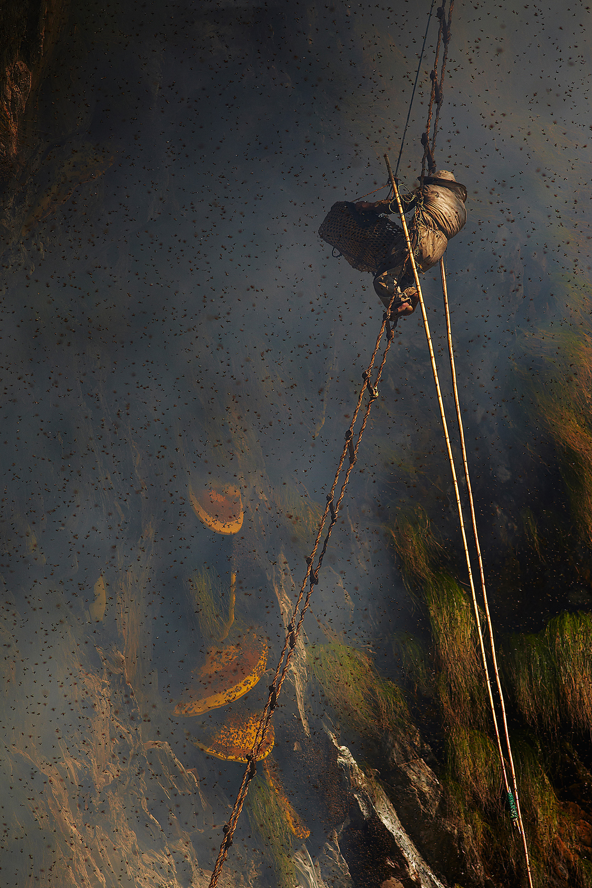 "A Nepalese ""honey hunter"" harvesting honey in the Himalayas. (Credit: Andrew Newey)"
